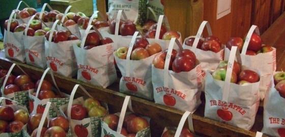 cortland_apples